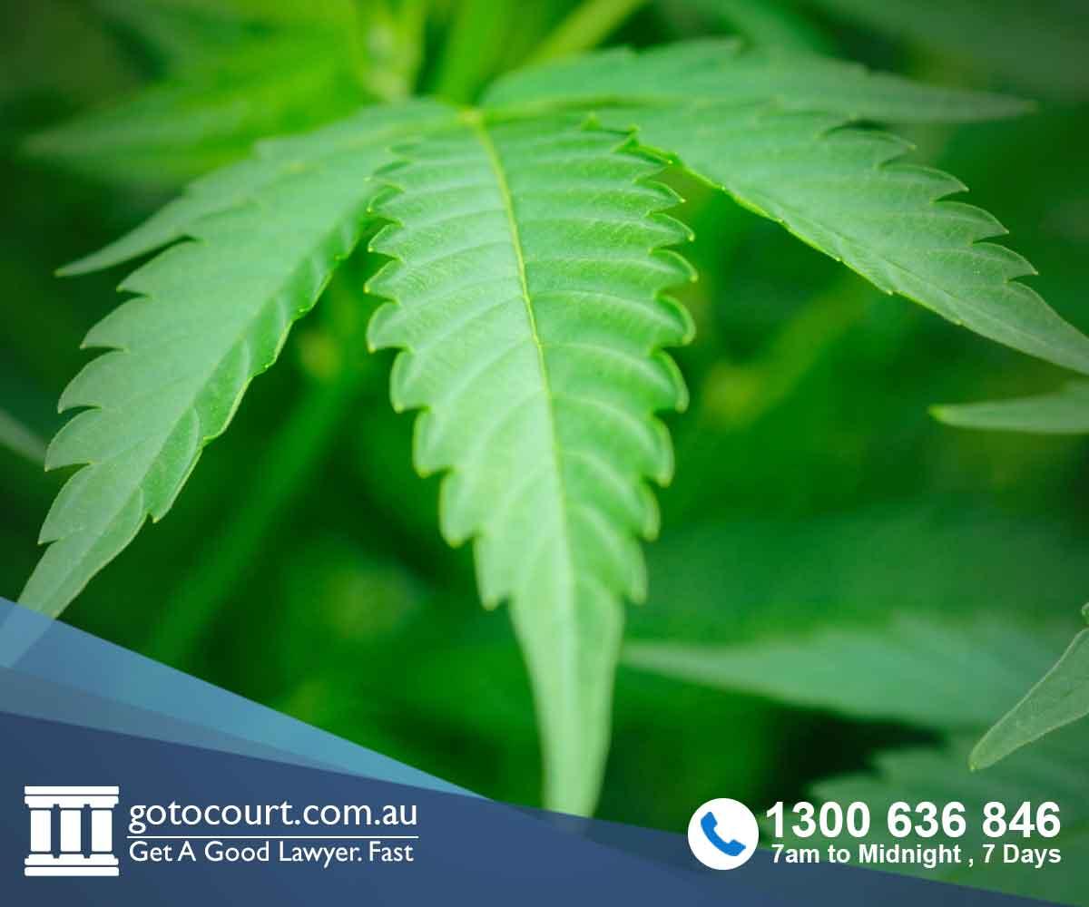 Drug Offences in Tasmania