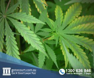 Medicinal Cannabis (Qld)